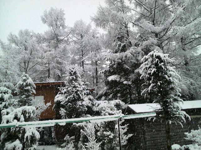 またもや雪!!